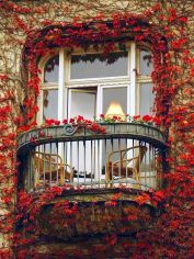 red leaf ivy balcony in paris via bloglovin