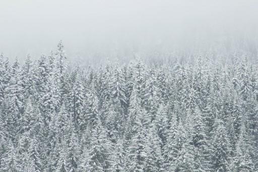gray_winter forest via boss fight