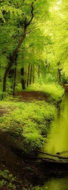 pinterest_forest