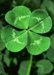 pinterest_green four leaf clover