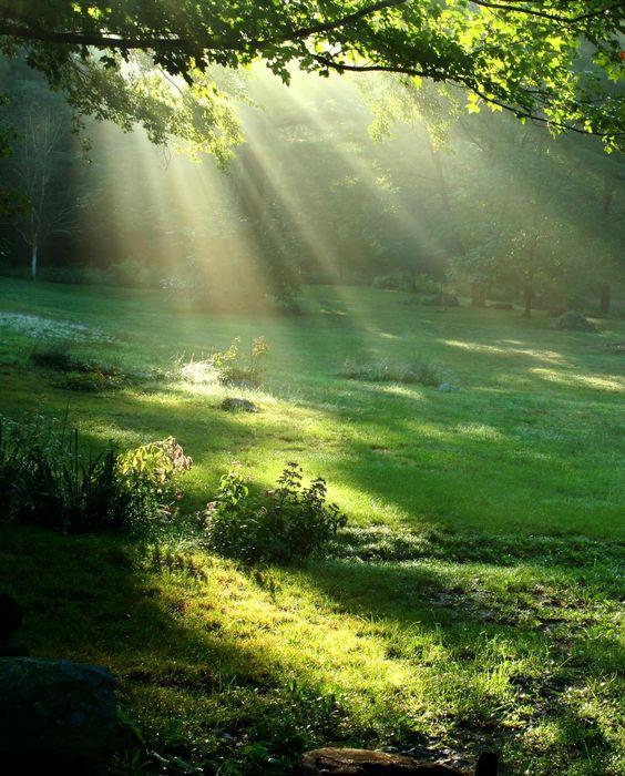 pinterest_sunlight through trees