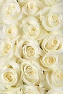 yellow roses via calyx flowers