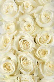 yellow roses via calyx flowers