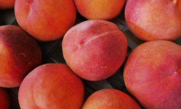 peaches FREE IMAGE via pixabay