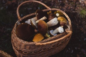 mushrooms FREE IMAGE via boss fight
