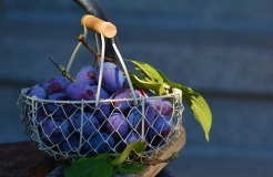 PLUMS_FREE IMAGES VIA PIXABAY